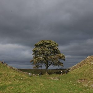 Solitary Tree by TRacey McGovern, scored 17