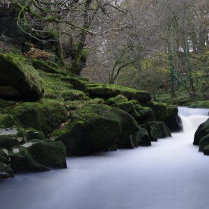 Woodland Water by Alan Kemp, scored 20 and Second Place