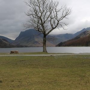 Tree at Buttermere by Mel Barnes, scored 16
