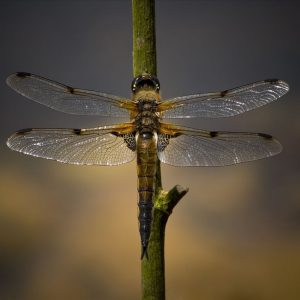 Four Spot Chaser by Mark Dyson Score: 20 & Winner