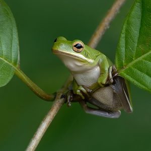 Green Tree Frog by Bert Haddock Winner of the digital Natural History Category