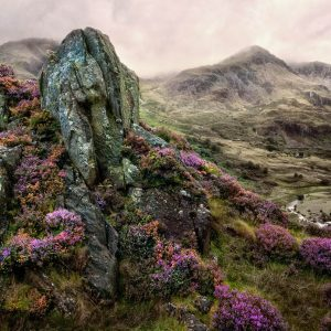 Snowdonian Heather by Keith Richardson Score: 20 points