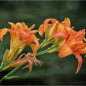 Flowers in Oils by Mike Aspinall, Creative Digital, 12, Commended