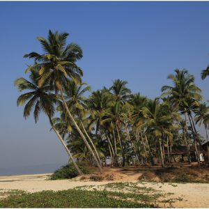 Arossim Beach, Goa by Gwen Barnes, 16