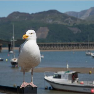 Postcard from Barmouth by Pawel Kow, 14