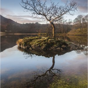 Rydal Tree by John Chappell, Landscape, WINNER