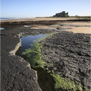 Bamburgh Castle by John Chappell, 15