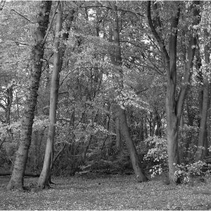 Monochrome Woods by Gordon Armstrong, 14