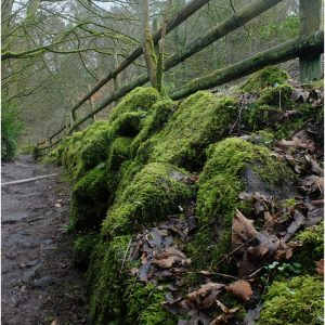 Mossy Path by Gordon Armstrong, 13